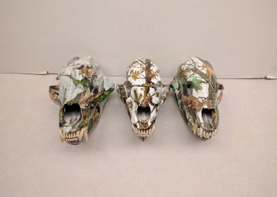 3 Bear skulls